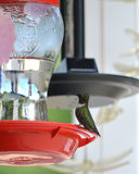 Male ruby throated hummingbird. A male ruby throated hummingbird sits on a perch of a feeder Royalty Free Stock Image