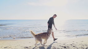 Male runner and his husky dog jogging on the beach slow motion stock footage