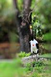 Male Saddle-billed Stork Stock Images