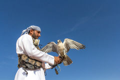 Male saker falcon during a falconry flight show in Dubai, UAE. Male saker falcon Falco cherrug during a desert falconry flight show with a male falconer dressed Stock Photo