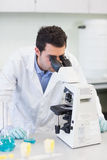 Male scientific researcher using microscope in lab. Male scientific researcher using microscope in the laboratory Royalty Free Stock Images