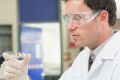 Male scientist analyzing pills in lab. Close up side view of a male scientist analyzing pills in the laboratory Stock Photos