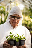 Male scientist in clean suit examining saplings. At greenhouse Stock Image