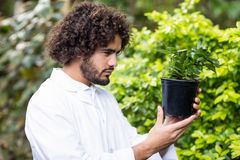 Male scientist examining potted plant. Side view of male scientist examining potted plant at greenhouse Stock Photo