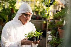 Male scientist examining saplings. At greenhouse Stock Photos