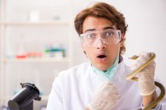 The male scientist extracting poison from snake for drug synthesis. Male scientist extracting poison from snake for drug synthesis royalty free stock image