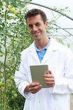 Male Scientist In Greenhouse Researching Tomato Crop Royalty Free Stock Photography