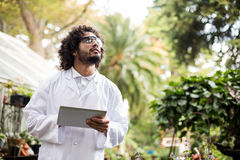 Male scientist inspecting plants at greenhouse. Male scientist inspecting plants while holding digital tablet at greenhouse Royalty Free Stock Photos
