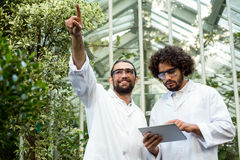 Male scientist pointing while colleague using digital tablet. Against greenhouse Royalty Free Stock Photography