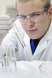 Male Scientist With Test Tube In Laboratory Royalty Free Stock Photo