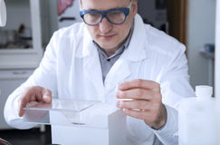Male scientist with test tube. Royalty Free Stock Photo