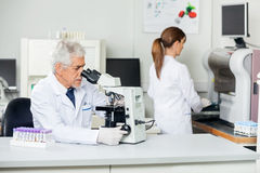 Male Scientist Using Microscope In Lab. Senior male scientist using microscope with colleague working in background Stock Photos