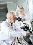 Male Scientist Using Microscope In Lab. Senior male scientist using microscope with colleague working in background Royalty Free Stock Photo