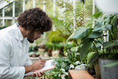 Male scientist writing in clipboard while examining plants. Side view of male scientist writing in clipboard while examining plants at greenhouse Royalty Free Stock Photos