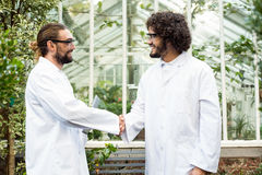 Male scientists handshaking outside greenhouse Royalty Free Stock Image