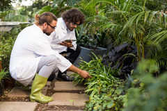Male scientists inspecting plants. At greenhouse Royalty Free Stock Images
