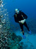 Male scuba diver. Looking at glass fish Royalty Free Stock Photos