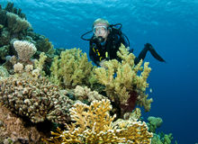 Male scuba diver. Scuba diver on pristine reef Stock Image