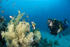 Male scuba diver observing marine life. Stock Photography