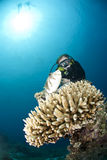 Male scuba diver observing a pufferfish. Stock Photo