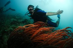 Male scuba diver swimming over red coral. In Thailand Stock Photos