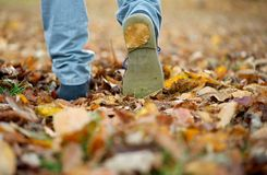 Male shoes walking on fall leaves outdoors. Close up male shoes walking on fall leaves outdoors Royalty Free Stock Image