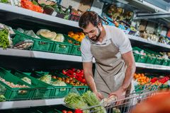 Male shop assistant in apron arranging fresh vegetables. In grocery shop stock photos