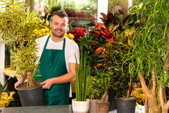Male shop assistant potted plant flower working. Smiling Royalty Free Stock Images