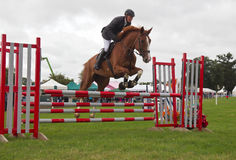 Male show jumper Royalty Free Stock Image