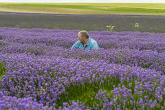 A male sitting in lavender field. In the summer Royalty Free Stock Photo