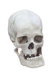 Male skull. Real male skull at the white background Stock Photography