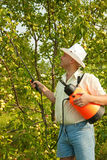 Male spraying tree branches Royalty Free Stock Photo