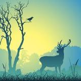 Male Stag Deer Vector Illustration