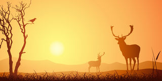 Male Stag Deer Stock Images