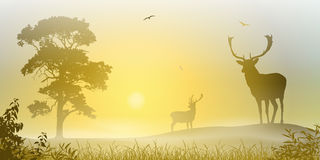 Male Stag Deer. On a Misty Meadow with Tree and Sunset, Sunrise Royalty Free Stock Image