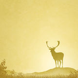 Male Stag Deer Royalty Free Stock Photo