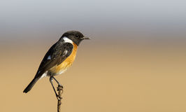 Male Stone chat in nice light Royalty Free Stock Photos