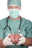 Male Surgeon Holding Brain Royalty Free Stock Photo
