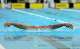 Male swimmer. Powerful male swimmer swimming butterfly stroke Stock Photography