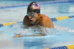Male Swimmer Competing In Race Royalty Free Stock Photos