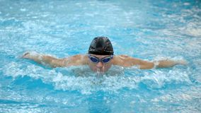 Male swimmer doing butterfly stroke during training in swimming pool, Slow motion. Male swimmer doing butterfly stroke during training in swimming pool, Slow stock footage