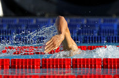 Male swimmer. Swimming crawl in a competition swim pool Stock Image