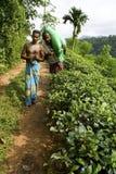 Tea plantation workers in Sri Lanka. 2 male tea plantation workers in hills of Sri Lanka carrying sack of tea leaves Stock Photo