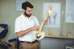 Male therapist holding spine model Royalty Free Stock Photo