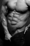 Male torso. Muscled male torso in black and white royalty free stock images