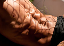Male torso. Muscled male torso with a shadow net Royalty Free Stock Images