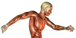 male torso för rörelsestudy vektor illustrationer