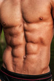 Male torso. Muscled male torso with abs Stock Image