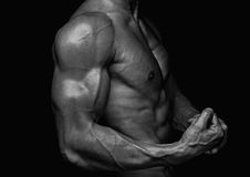 Male torso. Muscled male torso with abs Stock Images