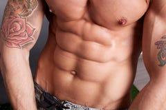 Male torso Royalty Free Stock Photo